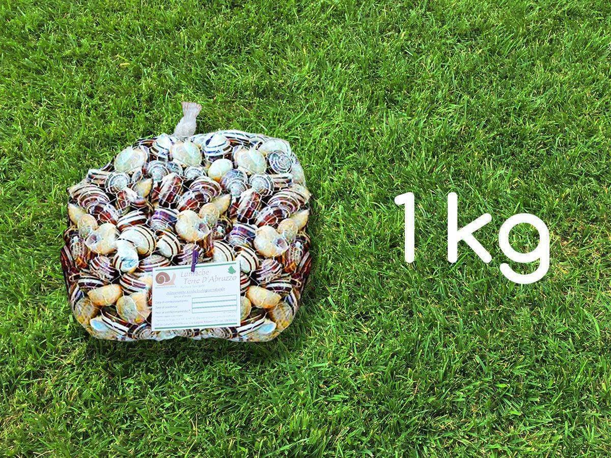 vendita lumache rigatella kg